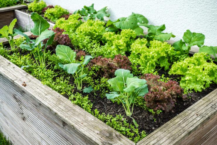 low budget hochbeet selber bauen anleitung tipps zur bepflanzung. Black Bedroom Furniture Sets. Home Design Ideas
