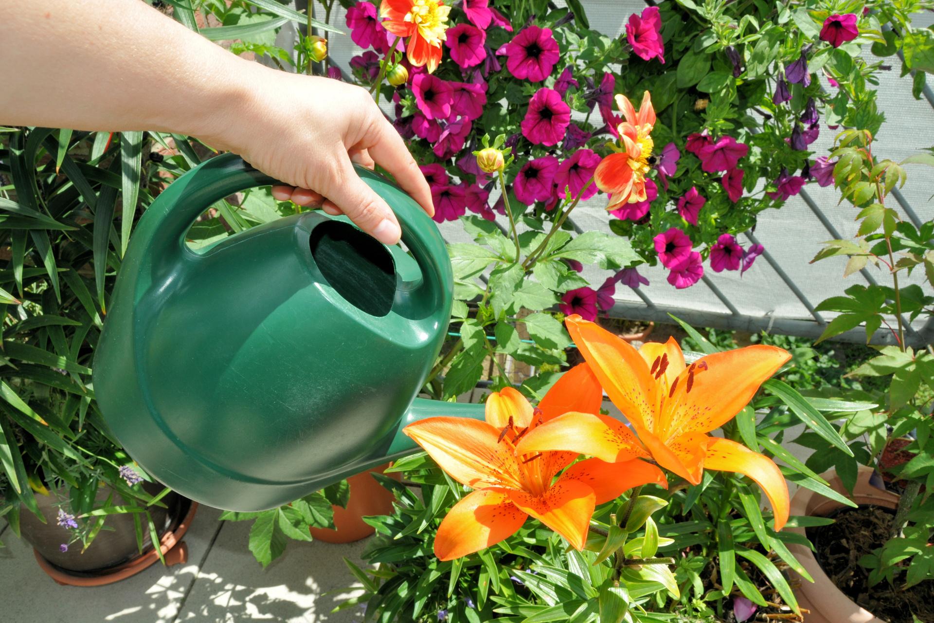 pflanzen gießen im urlaub: 7 tricks - so geht's richtig | preis.de